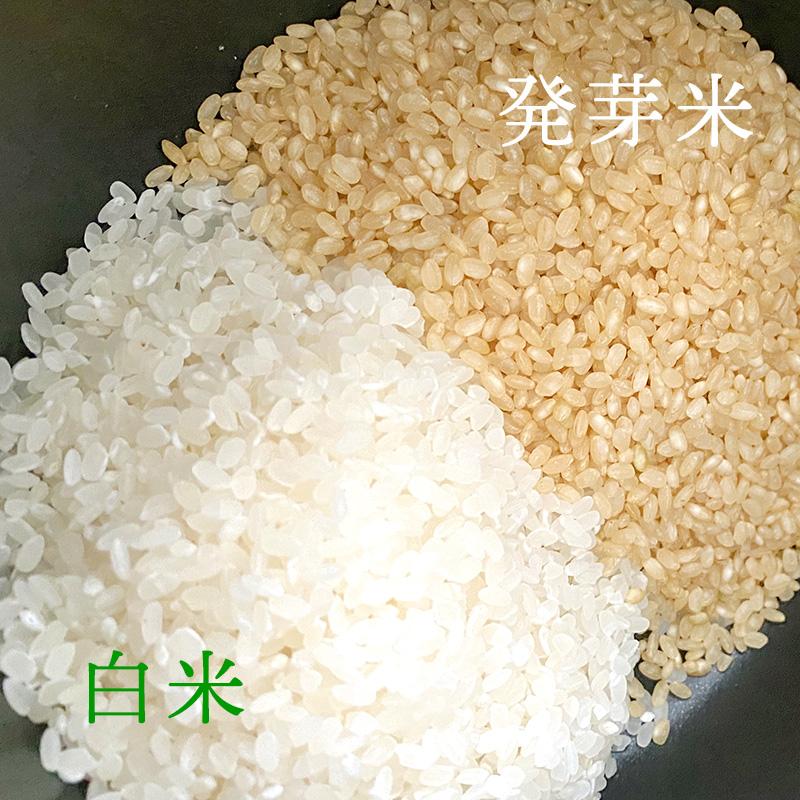 ファンケル発芽米の特徴と栄養